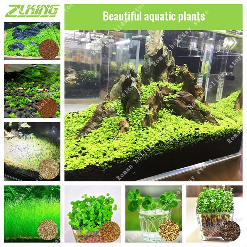 Zlking 200 1000 pcs green aquarium grass seeds fish tank for Ornamental pond plants