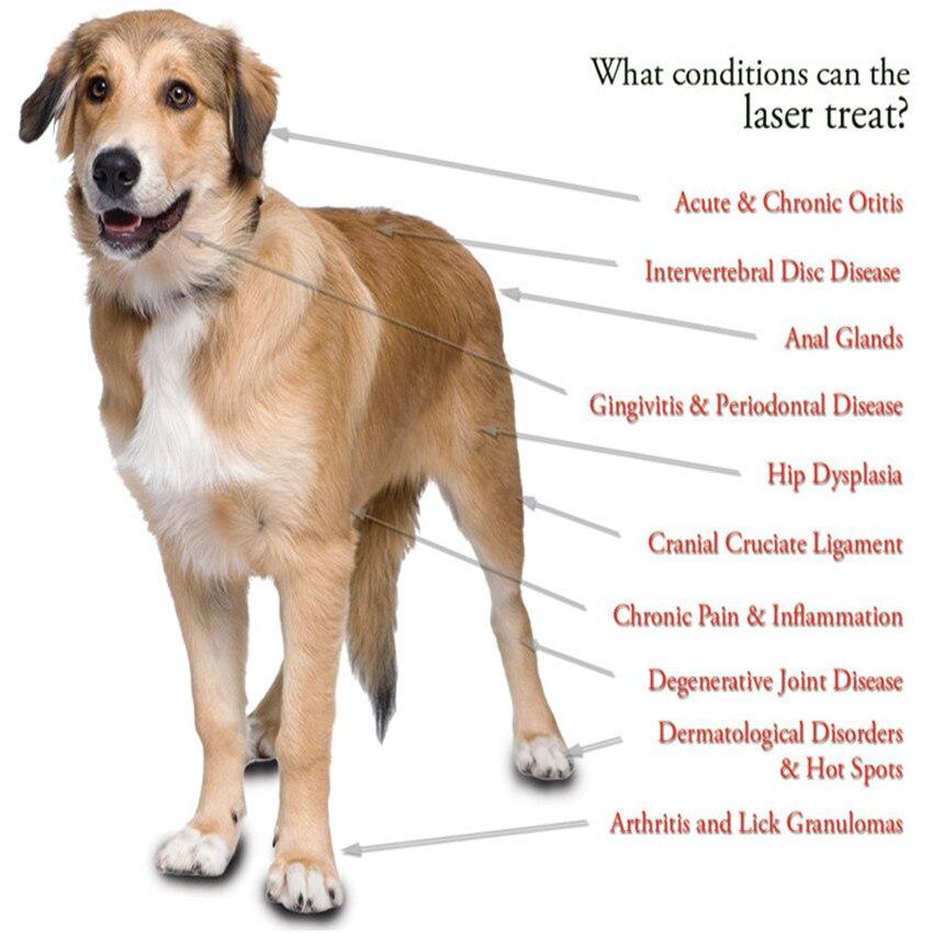 ATANG 2018 Новый ветеринарный собака и лошадь кошка животные Обезболивание LLLT терапия устройство для 808nm инфракрасный лазер Детская безопаснос...