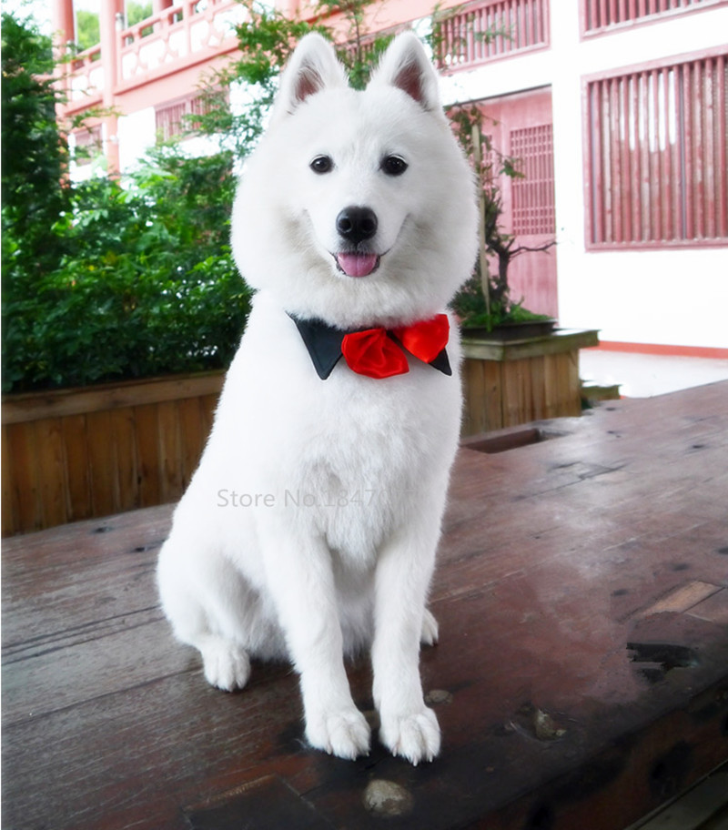 Large Breed Dog Bow Ties