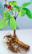 20pcs Chinese Ginseng Seeds Rare Heirloom Herbal Seed Home Garden Flower Diy Plant Sementes , Grow Your Own Ginseng Roots