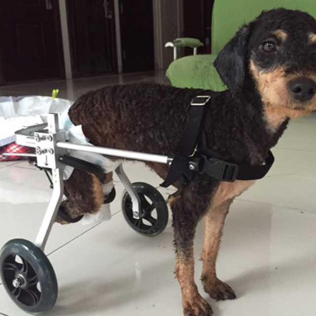 Wheelchair Dog Chromcraft Chair Parts The Cat And Paralyzed Scooter Car Hind Leg Disabled Assisted Rehabilitation