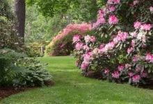 Laeacco Verde Primavera Flores Do Jardim Da Paisagem Foto Fotografia Adereços Cenários Para Photo Studio Fundos Digital Personalizado