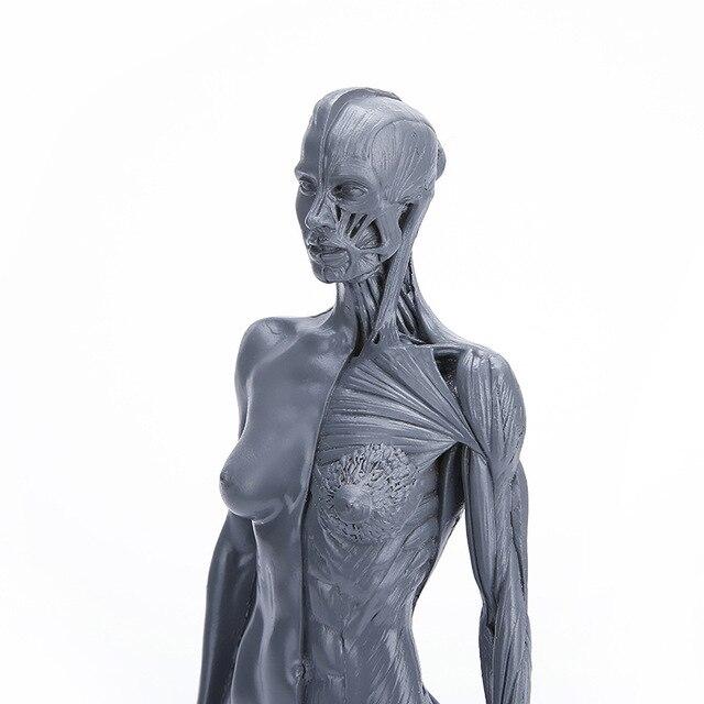 Natural Resin 30cm Human Female Artwork Model Medical Muscle ...