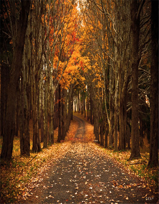 Autumn Woods Path 5x7ft Photography Background Backdrop