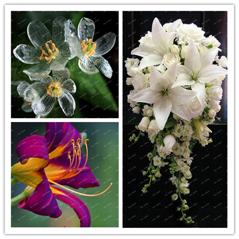 Cheap perfume lily seeds, Bonsai potted plant, Rare Lil