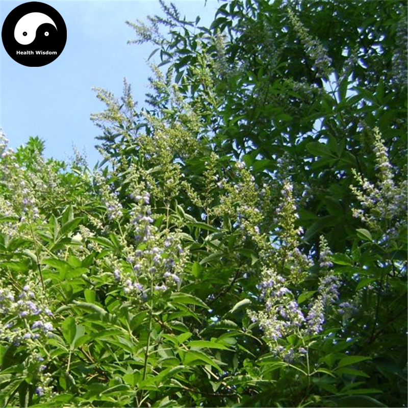 Купить Витекс Negundo дерево Semente 200 шт. завод кустарник ствола дерева Jing Tiao