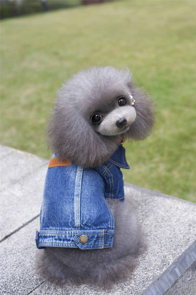 A39 pes na jaře podzimní denim kabát pro 2 nohy - pro domácí mazlíčky design pet oblečení zimní oblečení psa