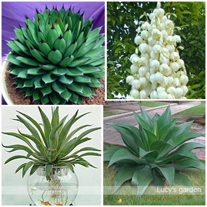 Online Buy Wholesale live indoor plants from China live indoor ...