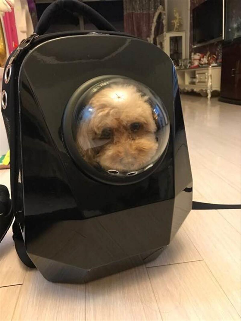 pet bag backpack19
