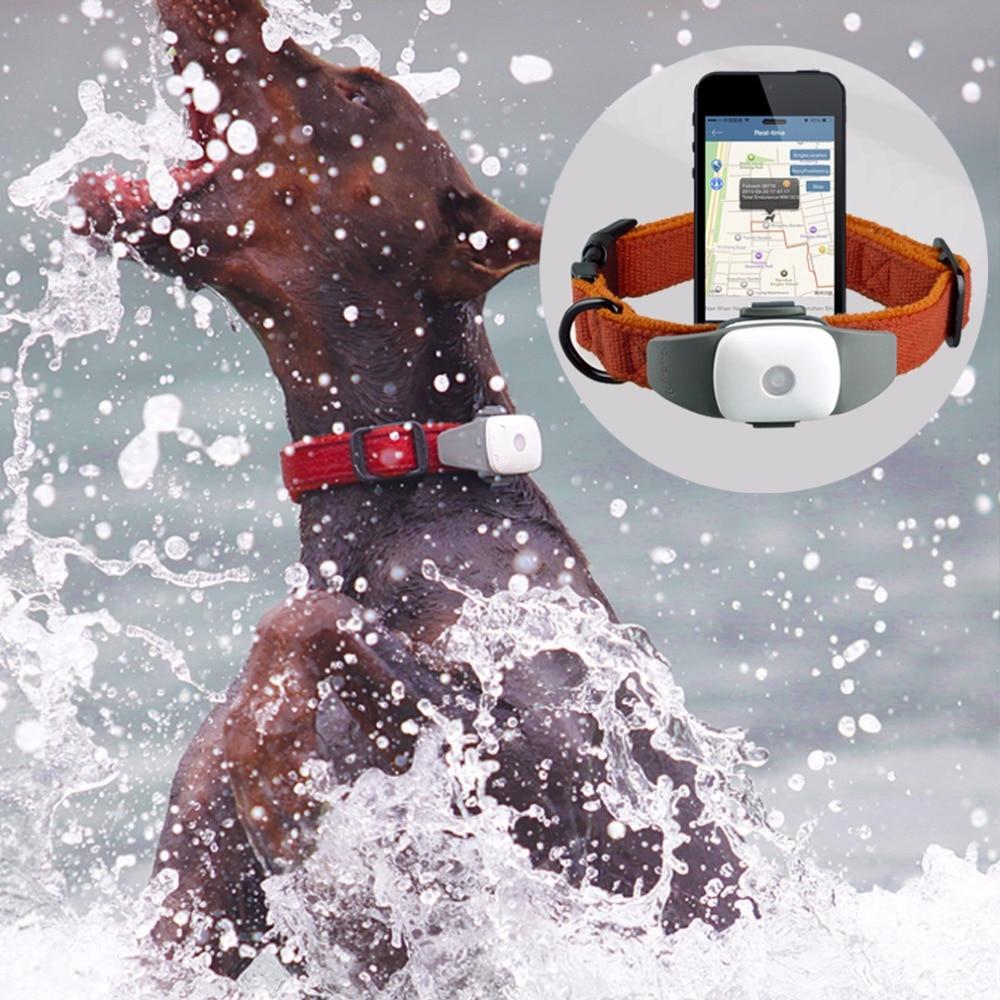 Pet GPS, Pet GPS Tracker, Pet Activity Monitor, GPS Collar pet attire sparkles dog collar 8 12in pink