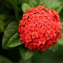 50 Pieces / Lot Festive Red Hydrangea Flower Seeds DIY Garden Bonsai Courtyard Plant Hydrangea Flower Seeds
