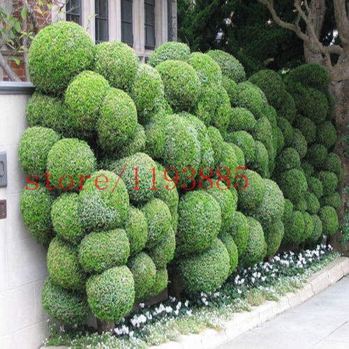 Popular Outdoor Bonsai Tree-Buy Cheap Outdoor Bonsai Tree ...