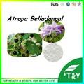 Standard Atropa Belladonnal Extract, Pure Scopolamine Powder, Atropa Belladonnal Extract 5g/lot