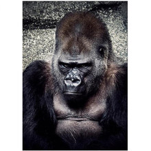 Full DIY Diamond Painting Chimpanzee Animal Diamond Embroidery Apes monkey photo Cross Stitch Diamond Rhinestone Home Decoration(China)