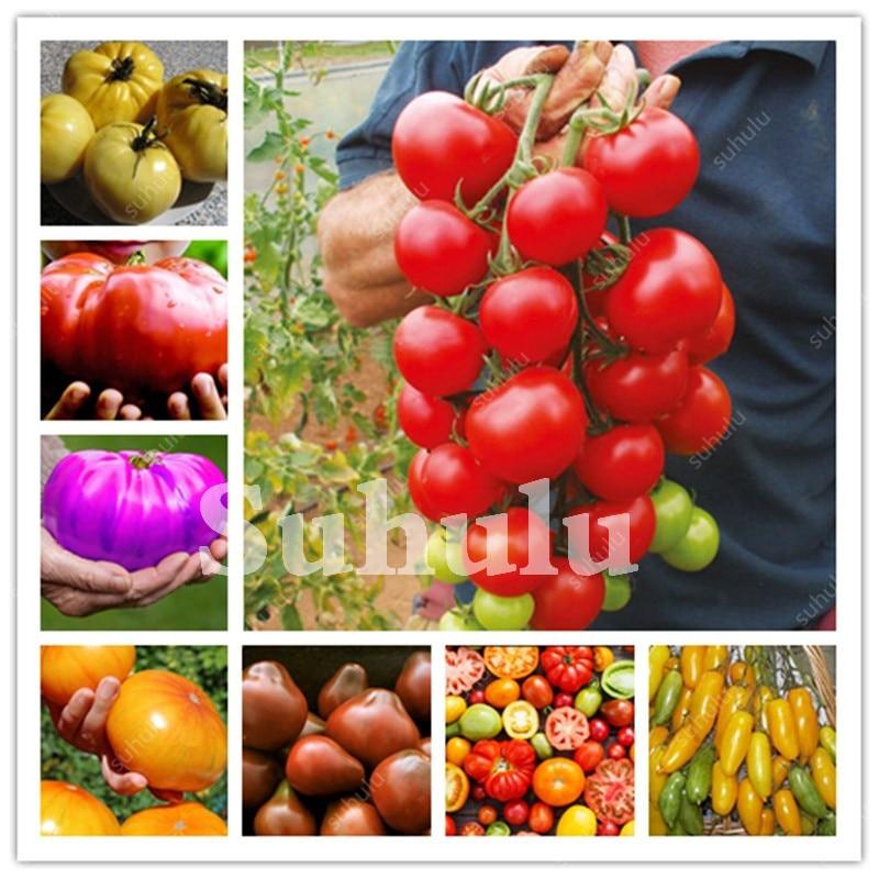 Milk Tomato Bonsai, Climbing Cherry Tomatoes, Organic Fruits And Vegetables Non-Gmo Food Pot Diy Home Garden Plant - 200 Pcs
