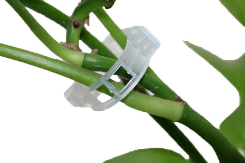 100pcs ดอกไม้ดอกไม้สวนมาพร้อมกับแท่ง Buckle Snap-fit พลาสติกคลิปยึดถาวรเครื่องมือ Vines ตกแต่งอุปกรณ์เสริมอุตสาหกรรม