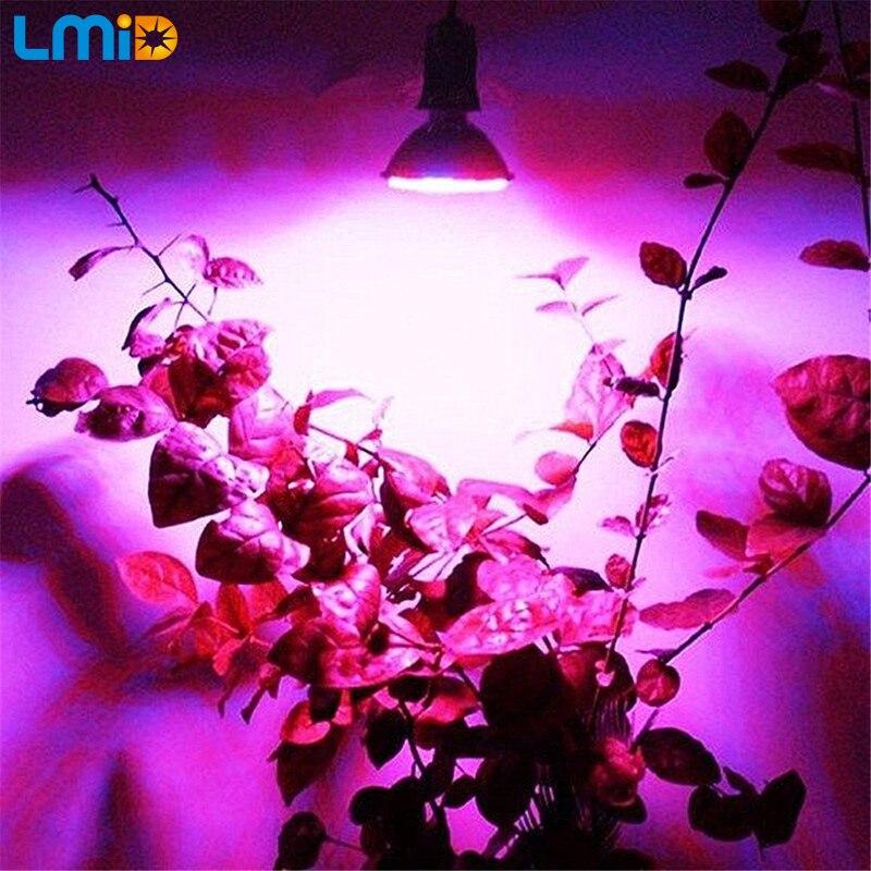 Lmid Ամբողջական սպեկտրով բույսերի աճող - Մասնագիտական լուսավորություն - Լուսանկար 6