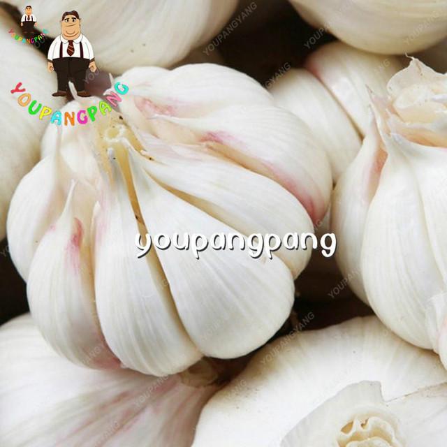 100Pcs Garlic Bonsai Healthy Bonsai Diy Plants Rare Onion Garlics Vegetable plantas Very Easy Grow For Home Garden decoration