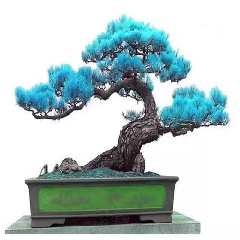 20 шт смешанные черный натурального соснового Крытый дерево бонсай деревянный Многолетние растения для домашнего декора сада лучшую упаковку Бесплатная доставка