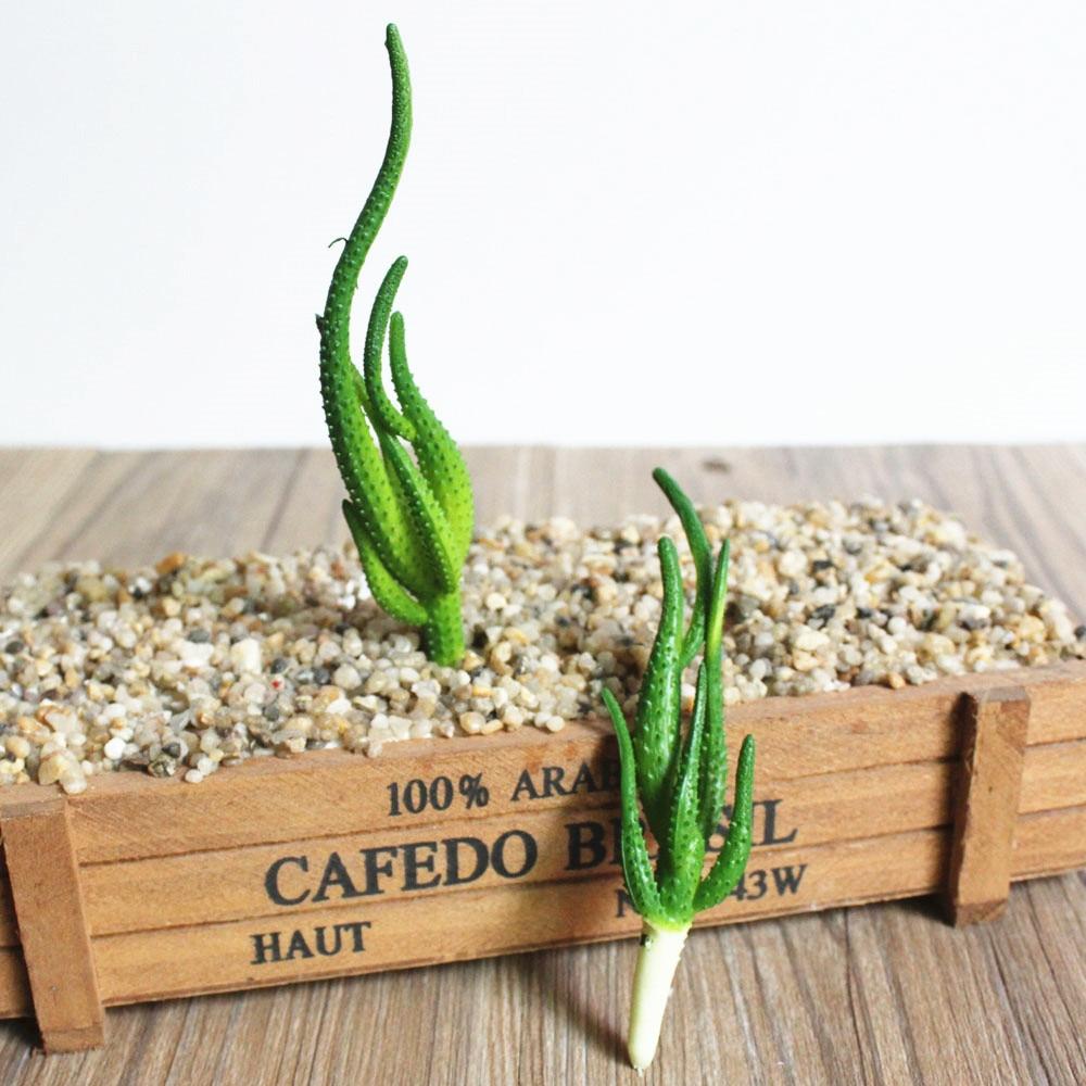Nieuwe Kunstmatige Cactus Vetplanten Plastic Bonsai Bloemen DIY Huis Decor  Nep Planten Landschap Tafel Decoratieve Woestijn plant 2 stks in Nieuwe ...