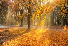 Laeacco Photography Backdrops Autumn Fallen Leaves Maple Forest Sunshine Scenic Photo Backgrounds Photocall For Studio