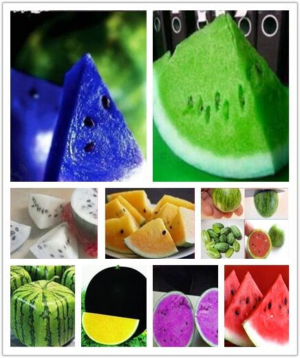 Hot Sell new seeds, watermelon seeds 20PCS,red/yellow/white / blue flesh watermelon seeds, delicious fruit seed