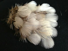 200Pcs/Lot!4-6cm RARE WHITE Lady Amherst natural pheasant feathers for craft/millinery freeshipping