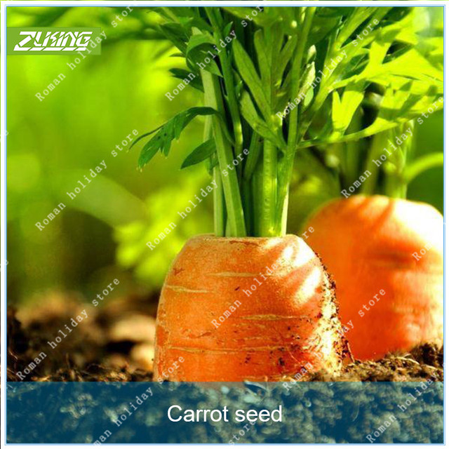 Zlking 100pcs Chinese Organic Carrot Vegetable Bonsai Organic