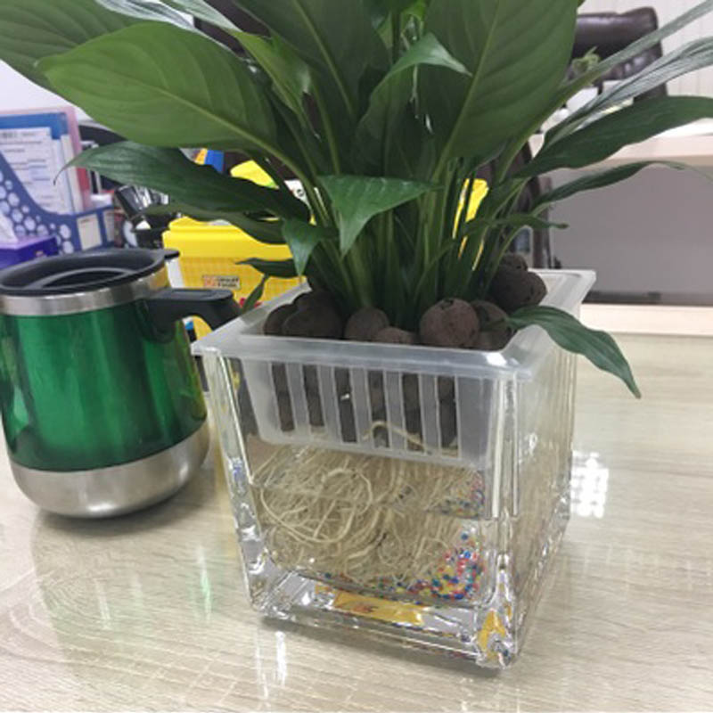 Automatic Watering Glass Vase Green Radish Glass Bottle Thickening Small Flower Pots Modern Simple Square Water Culture
