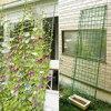 0 9 1 8m Plant Garden Trellis Net Plants Climbing Frame Fruit Tree Protect Anti Pest Weed Garden Supples discount