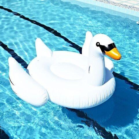 swan 1.9m