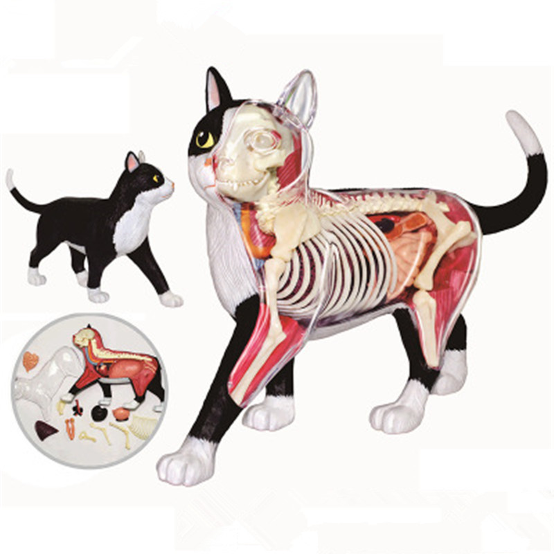4D MASTER Educational Assembled Toy Simulation Animal Black And White Cat Organ Anatomy Plastic Action Figure Model Toy X10284D MASTER Educational Assembled Toy Simulation Animal Black And White Cat Organ Anatomy Plastic Action Figure Model Toy X1028