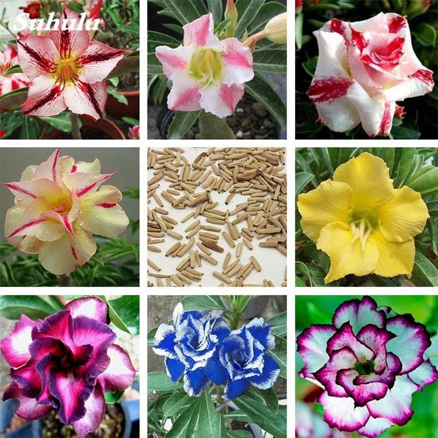 5 unids lote 100 cierto rosa del desierto bonsai plantas for Plantas decorativas ornamentales