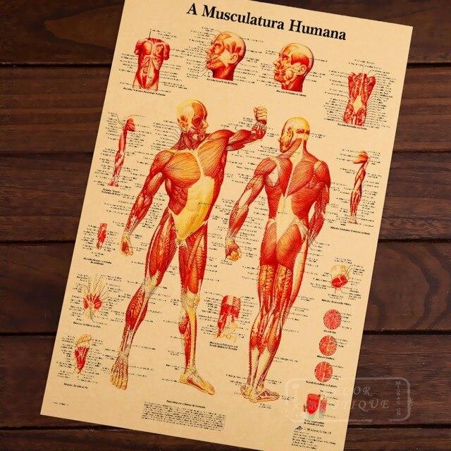 Mapa de cuerpo humano sistema muscular Classic vintage retro Kraft ...