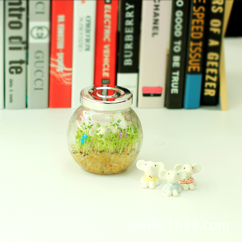 The new eco bottle cup King cultivation potted bonsai creative glass crafts custom micro landscape plants