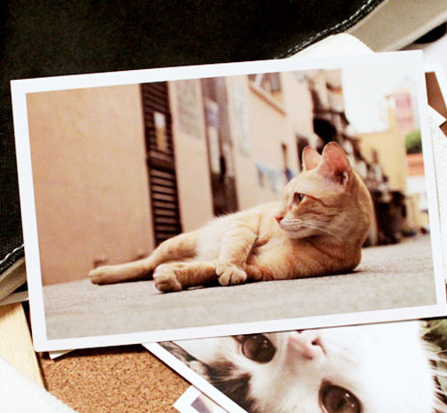 Free shipping wholesale 10sets/lot post card for pets cat cards 148*98mm Folding Postcard 350g Paper Greeting Card one for pets folding carriers the dome