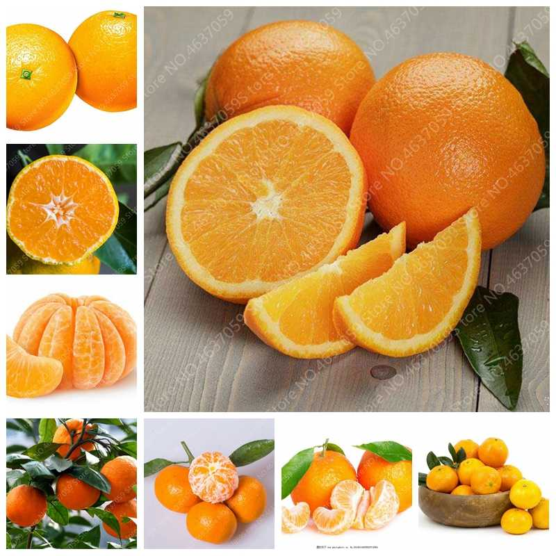 Murah 100 Pcs/bag Dimakan Jeruk Buah Mandarin Pohon Bonsai Jeruk Pot Tanaman Taman Mini Juicy Taman Manis Orange Sementes