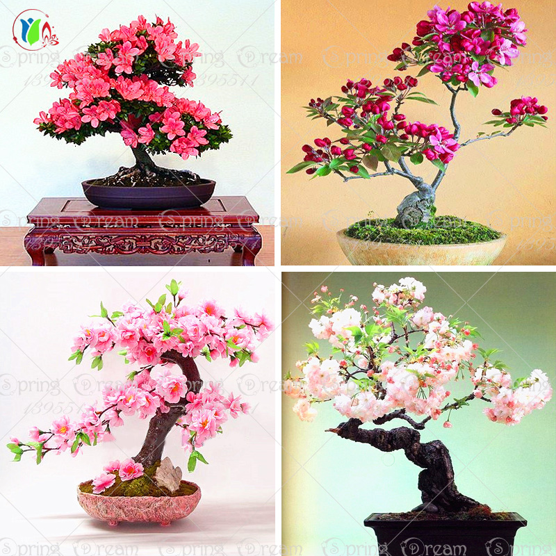 10pcs/lot japanese sakura seeds , bonsai flower Cherry Blossoms free shipping ornamental-plant
