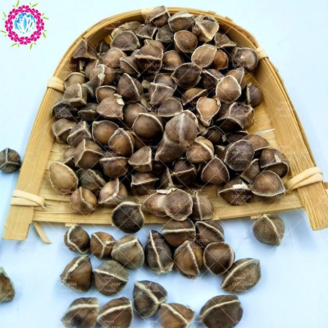 10 pcs graines de moringa moringa oleifera graines comestibles graines de bonsa plante en pot - Graine de lupin comestible ...