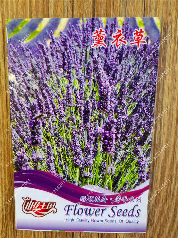 True Lavender plants, Lavender Angustifolia, Vanilla of Native Species Potted Plants for Home Garden real factory package