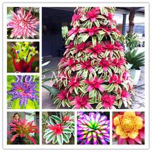 100 Pcs Colorful Bromeliad Bonsai Rare Vegetable Fruit Garden Succulent Plants Mini Cactus Pots Natural Growth For Home Garden