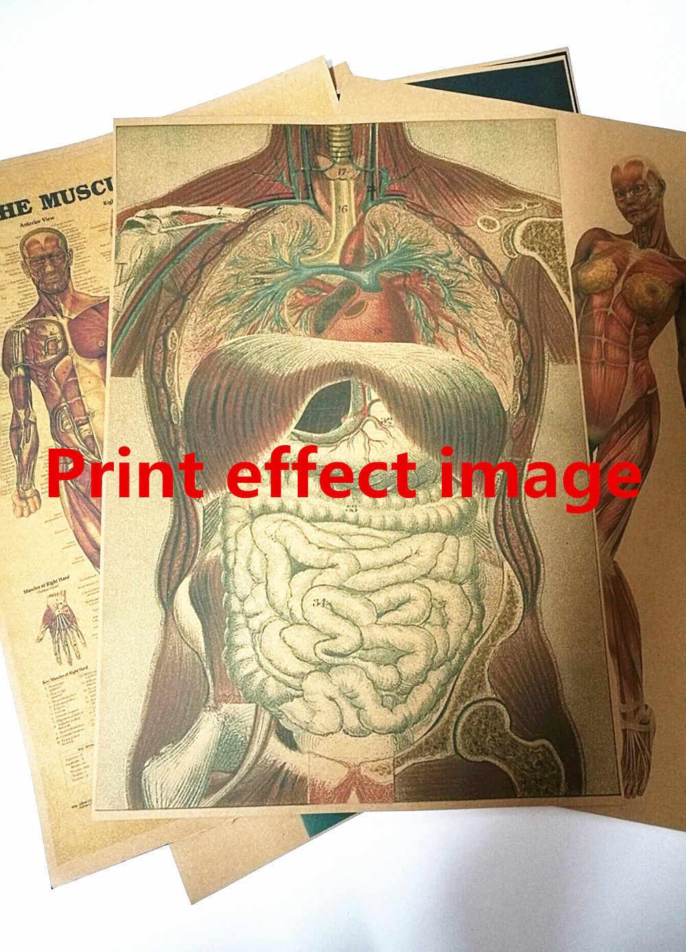 Retro 3D x-ray escaneado hombre humano anatomía pósteres esqueleto Junta órgano sistema Muscular fondo azul Pared de papel Kraft etiqueta engomada