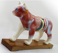 ENOVO Cat moxibustion model veterinarian learn animal anatomy model pet model animal acupuncture