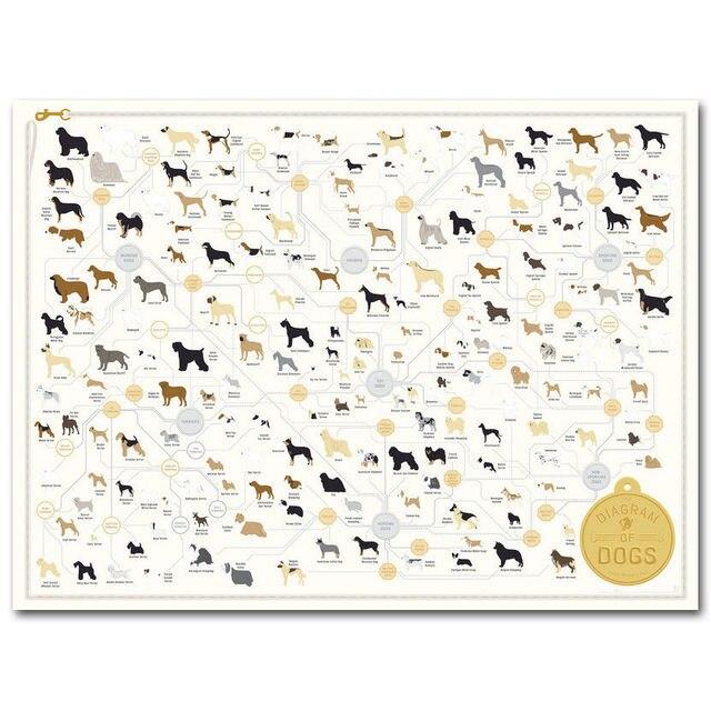 Dog Breeds The Diagram Of Dog Silk Poster Art Bedroom Decoration