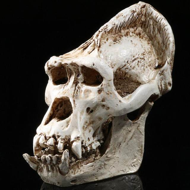 Tienda Online Resina chimpancé modelo anatomía cráneo cabeza dibujo ...