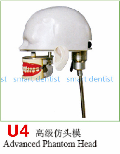 Good Quality advanced phantom head Apply to dental simulation training of teeth scaling  ...