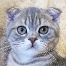 Алмаз живопись кот полный квадрат вышивка 3D Сделай сам горный хрусталь вышивки крестом кошки