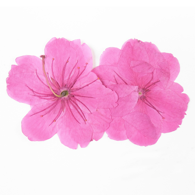 Pink Dried Cherry Blossom Flowers Ornaments For Diy Hand Work