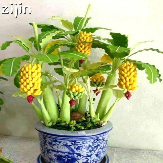 50 piezas mini banano bonsái árbol Tropical árboles frutales plantas balcón flor para la plantación del hogar tasa de germinación del 95%