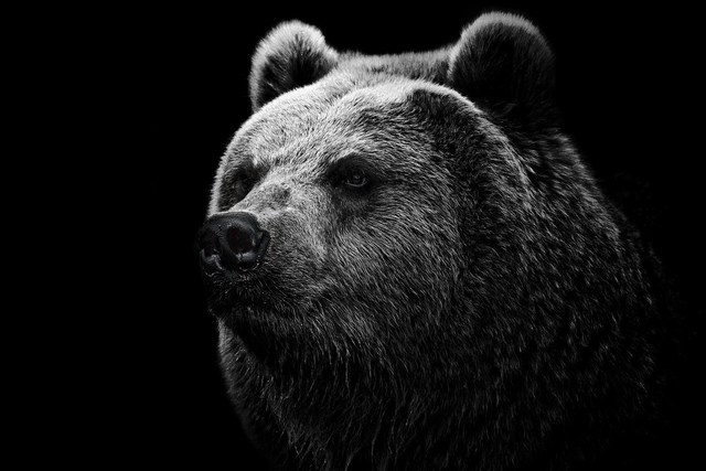 home decoration muzzle black head hair mouth bear background for